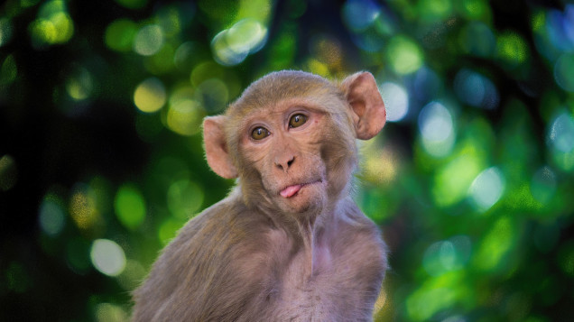 Test of COVID-19 mRNA Vaccine Begins with Monkeys